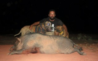 warrego bull arabs for - photo #36